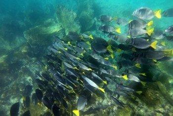 Un arrecife en las Galápagos, Ecuador.