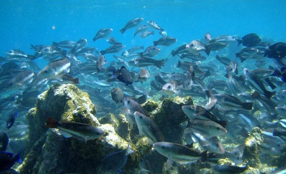 Coral Reefs restoration at the coast of Banaire in the Caribbean.