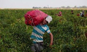 A agricultura familiar é a forma predominante de produçãode alimentosnos países desenvolvidos e em desenvolvimento