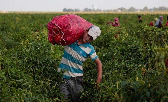 De acordo com o relatório, na maioria dos países, as rendas dos produtores de alimentos em pequena escala são menos da metade das dos maiores produtores de alimentos.