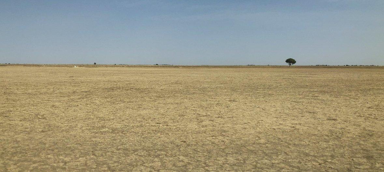 在喀麦隆,不可持续的土地使用导致了荒漠化。