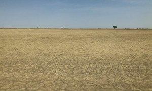 Au Cameroun, l'exploitation non durable des sols a contribué à la désertification. (Février 2019)
