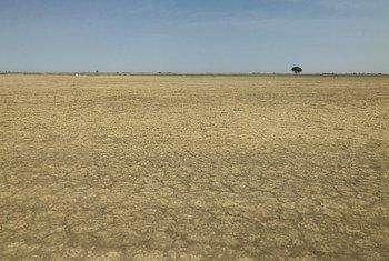 कैमरून में भूमि का इस्तेमाल टिकाऊ ढंग से न होने के चलते मरुस्थलीकरण की समस्या पैदा हुई है.