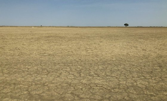 In Cameroon, unsustainable land use has contributed to desertification. (February 2019)