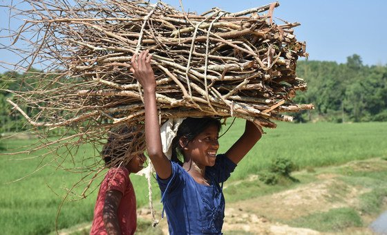Rohingya refugees in Bangladesh have few options other than firewood for their household energy needs. (August 2018)