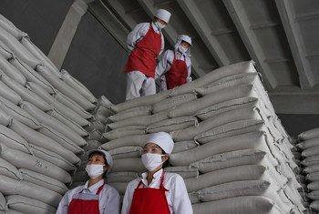 粮食署为朝鲜平城市的一家食品厂提供支持。