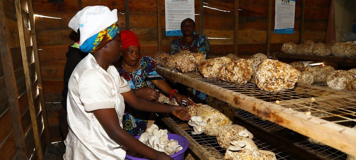 The UN Trust Fund in support of victims of sexual exploitation and abuse has supported women in the Democratic Republic of the Congo receive vocational trainings like mushroom farming. (October 2018)