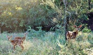Desastre natural obrigou a movimento de animais, o que pode ajudar a espalhar doenças