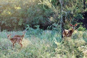 斯威士兰卢邦博生态保护区