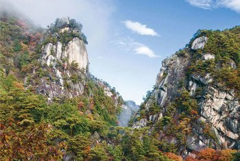 Reserva de Kobushi, en Japón.
