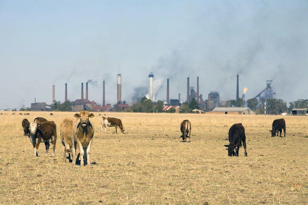 南非一处毗邻工业区的农场。 (资料图片)