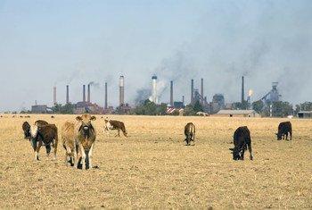 कार्बन उत्सर्जन में कटौती के लिए महत्वाकांक्षी कदम उठाने पर बल दिया जा रहा है.