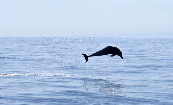मानव गतिविधियों से समुद्री जीवन बड़े पैमाने पर प्रभावित हुआ है. समुद्री जैव विविधता को सहेजने के लिए एक संधि पर बातचीत चल रही है.