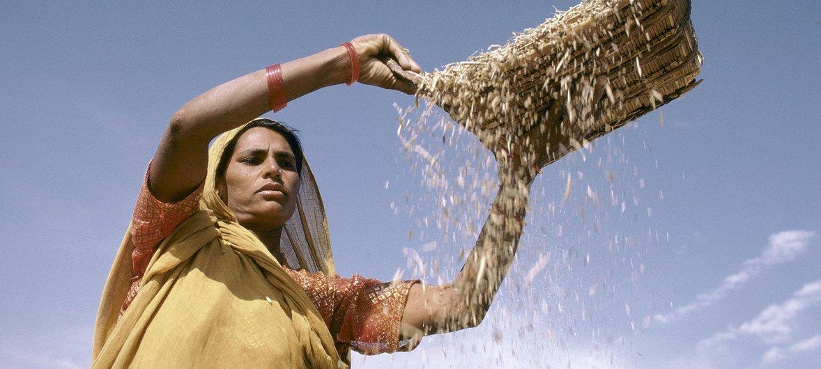 По прогнозу ФАО, цены на зерновые не вырастут и, возможно, даже снизятся.